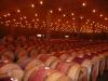 barrels052