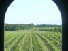 vinesthrubridge018